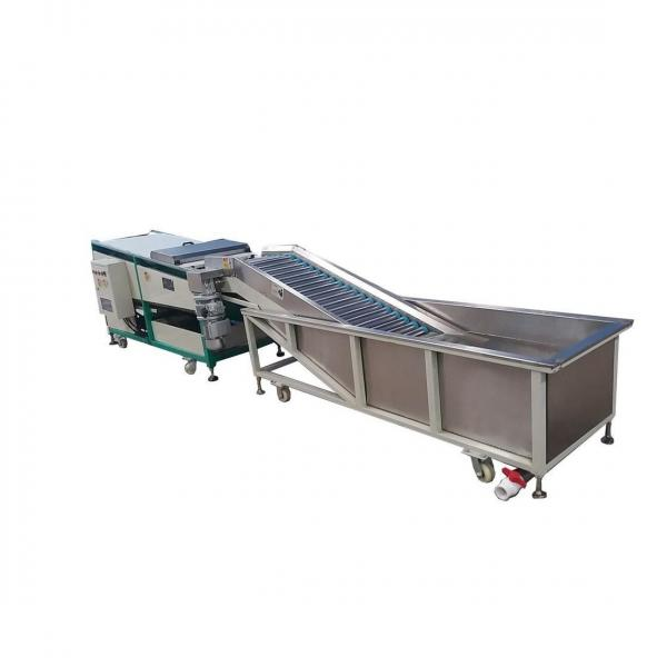 Fruit/Vegetable Washing Cleaning and Drying Machine Dates Palm Washer Equipment